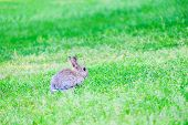 Gray Hare In The Grass In The Forest. poster