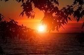 Sunset River Horizon Silhouette Branch Landscape. River Sunset Horizon. Sunset River poster