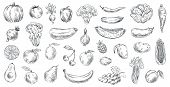 Sketched Vegetables And Fruits. Hand Drawn Organic Food, Engraving Vegetable And Fruit Sketch. Healt poster