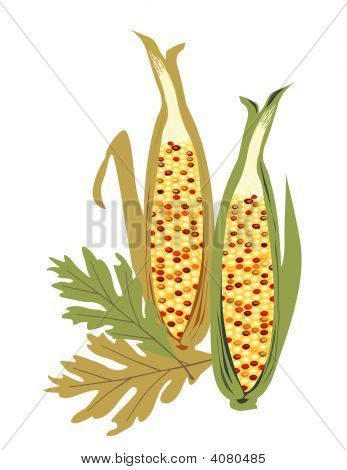 Isolated Indian Corn