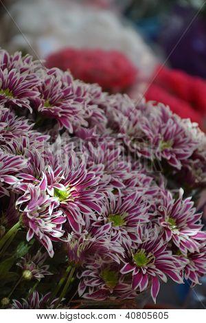 Spanish flower market