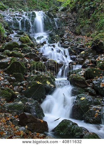 Cascade In Forest