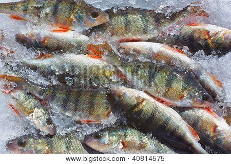 Winter Fishing