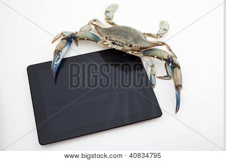 Blue Crab Holding Tablet