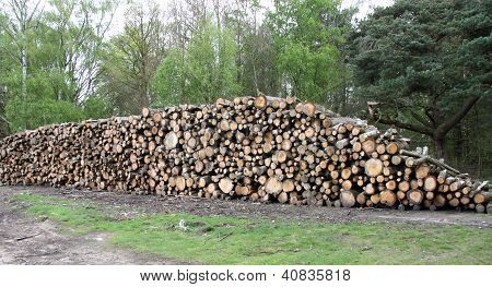 Forestry Tree Logs.