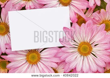 Pink Chrysanthemum Bouquet With Blank Tag
