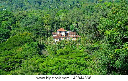 House In The Jungle