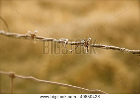 Frosted Barb Wire Farm Fence