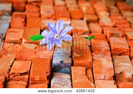 Purple flower in crack