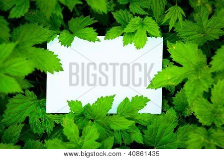 Blank card surrounded by beautiful green leaves