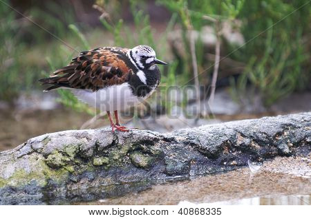 A colorful bird rests on a log near the water