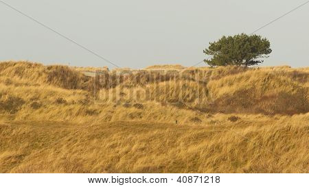 Dune Landscape On The Isle Of Ameland