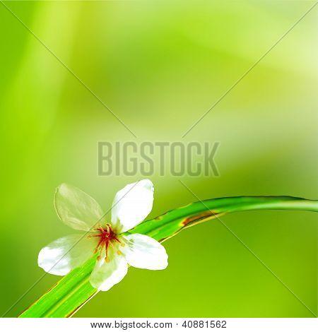 beautiful tung flowers
