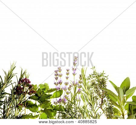 Herbs Border On White
