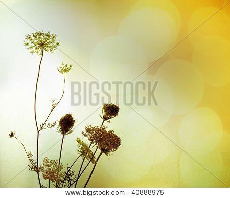 Silhueta de flores silvestres
