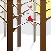 foto of sun perch  - Red Northern Cardinals perched on snowy branches on a wintry day with sun in the background - JPG