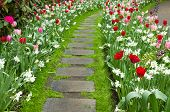 image of daffodils  - Stone walk way winding in spring flower garden