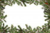 Постер, плакат: Рождественская елка ветви граничащих с копией пространства