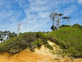 pic of windswept  - Windswept Trees on a Hillside on a Clear Sunny Day - JPG
