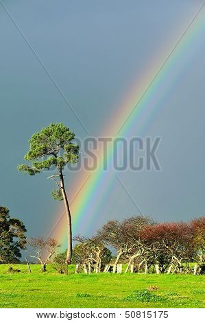 Serious Rainbow
