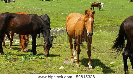 Black and brown horses on a meadow