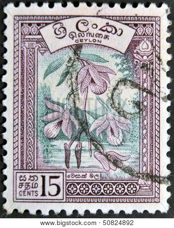 A stamp printed in the Ceylon sri lanka shows Vesak orchid (Dendrobium)