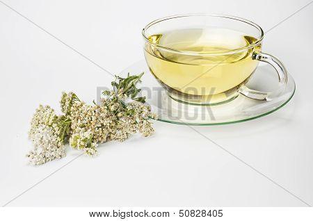 Fresh tea of common yarrow