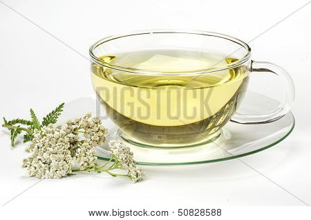 Herbal tea and fresh yarrow