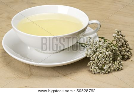 Herbal tea in a white cup