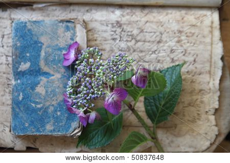 damaged vintage books with hydrangea flowers