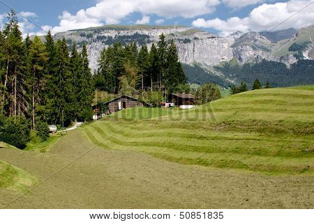 Fresh Green Grass In Alpine Meadow Surrounded By High Mountains.