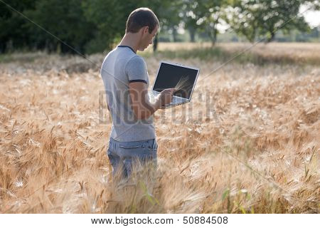Agronomist analysing wheat market using laptop