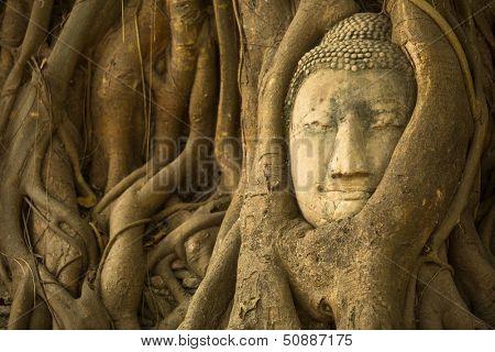 The Head of Buddha in Ayutthaya, Thailand.
