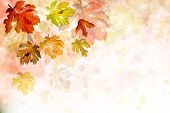 Abstract background of autumn leaves