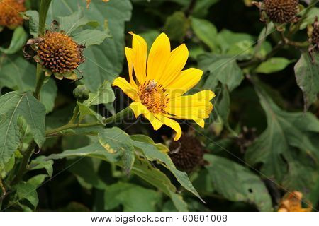 Yellow Flower and Bee