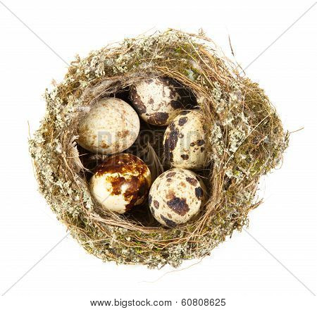Quail Eggs In A Nest On White Background
