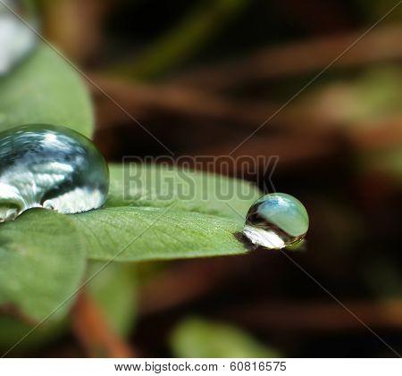 Fresh Droplets Macro