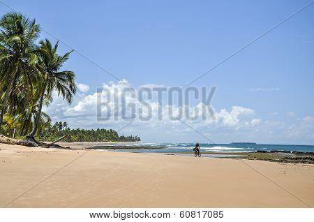 Man On A Bicycle, Beach Of Taipu De Fora (brazil)