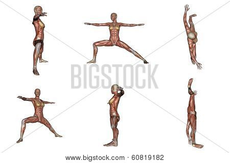 Warrior yoga pose for woman with muscle visible