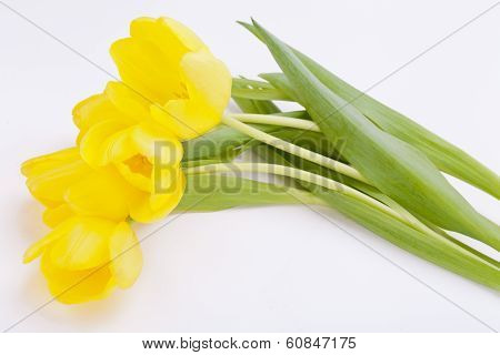 Bunch Of Cheerful Yellow Tulips