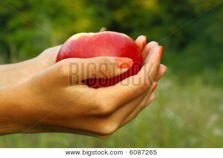 Apple in woman's hands