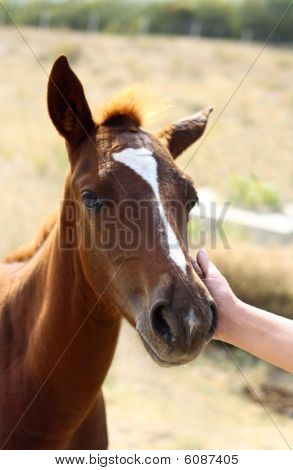 Patting little horse