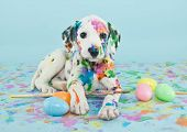 stock photo of egg  - A funny little Dalmatian puppy that looks like he just painted some Easter eggs - JPG