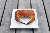 stock photo of cooked crab  - Cooked crab on white plate on a wooden background