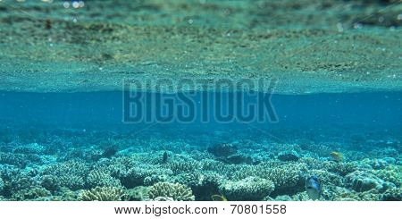 coral garden full of colorful fishes