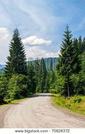 Road Through Forest In Mountains