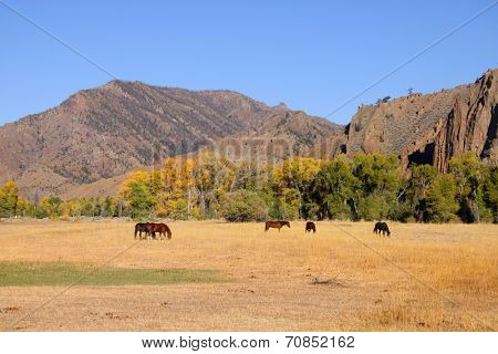 Horses grazing in prairies in Wyoming