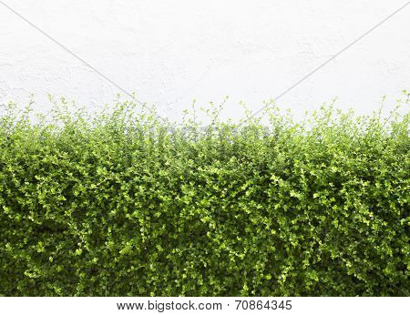 Bushes Fence Leaves