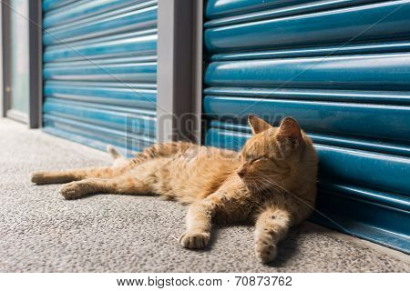 Tabby ginger cat rely in front of the blue iron gate to rest in the cat village of Houtong, Taiwan.