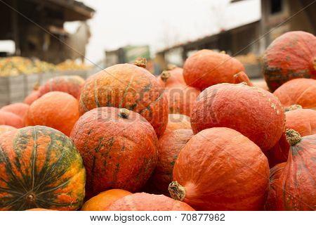Pumpkin Stand On A Farmer's Market